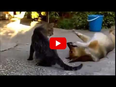 Animali buffi e divertenti amici mici for Cani giocherelloni