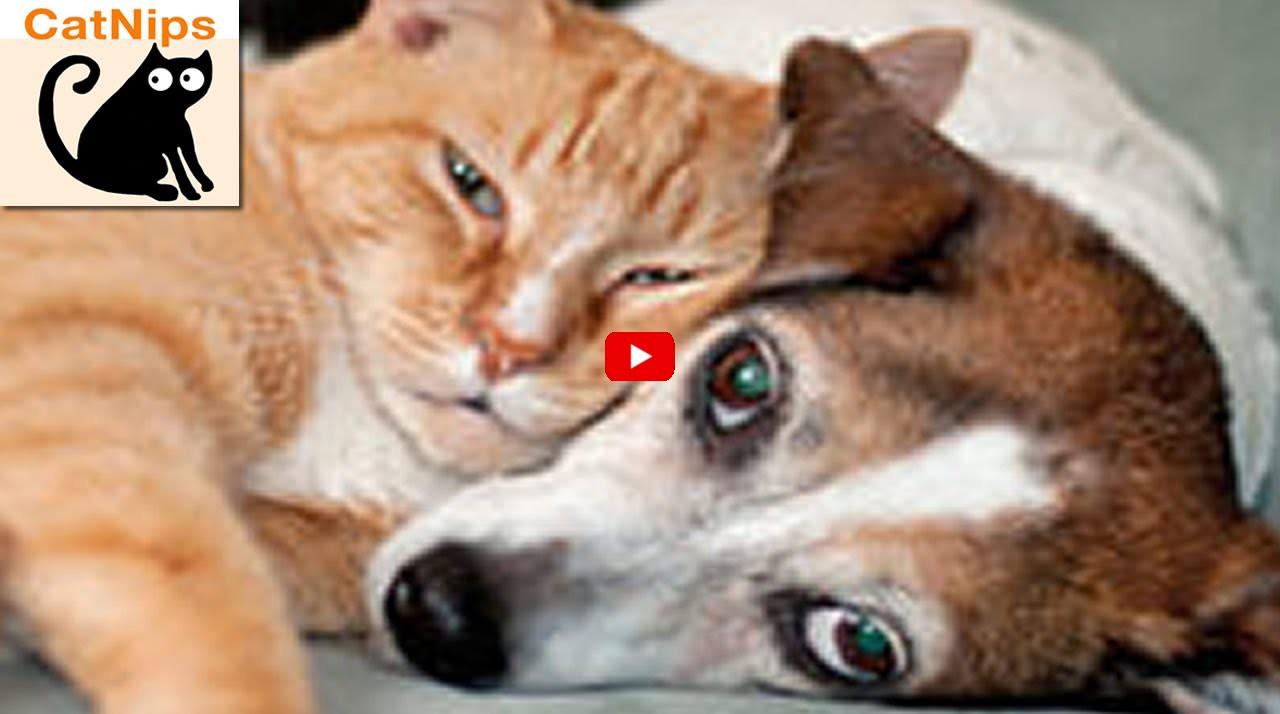 Gatti e cani amici mici for Cani giocherelloni