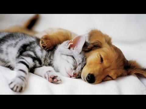 Cani e gatti amici per sempre amici mici for Cani giocherelloni