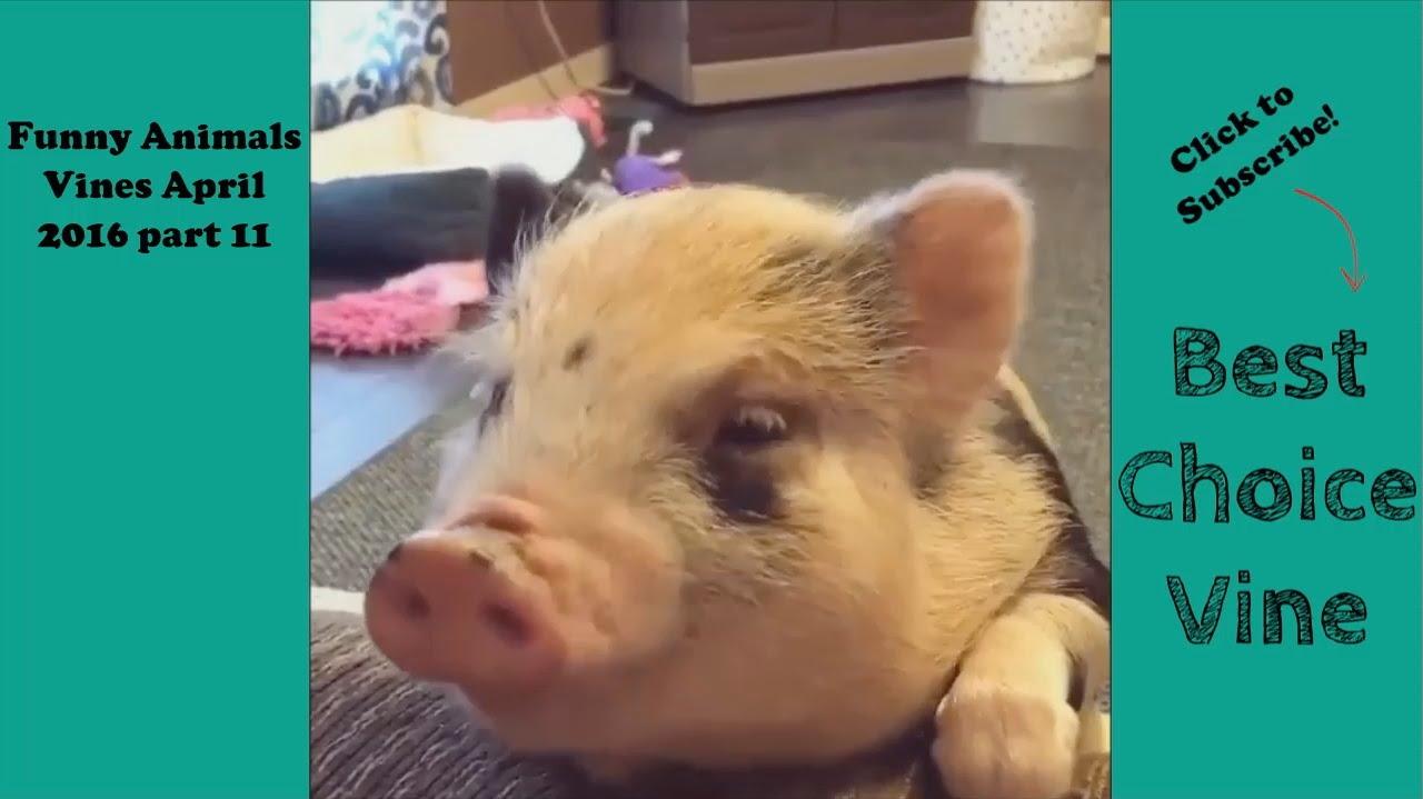 Video di animali adorabili e buffi amici mici for Cani giocherelloni