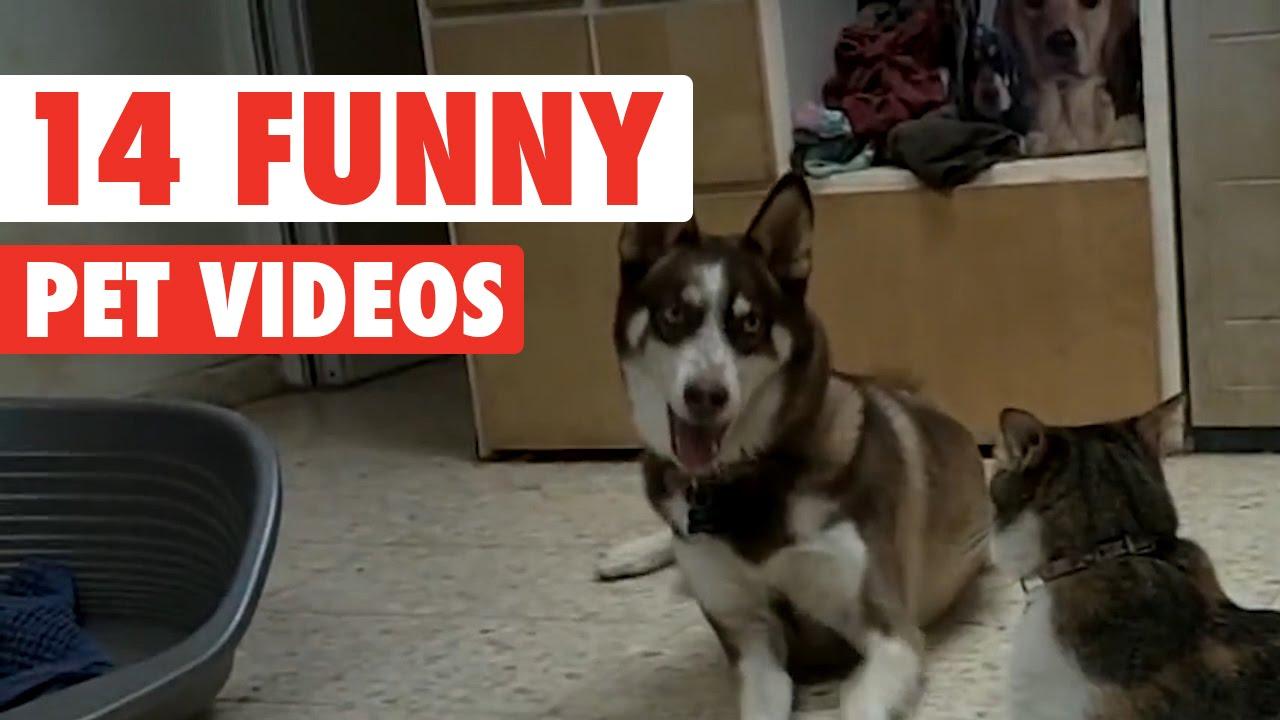 Video di animali divertenti e simpatici cani gatti e for Cani giocherelloni