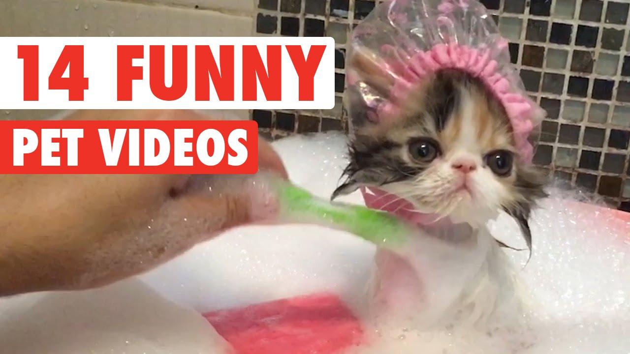 Video di animali teneri e giocherelloni gatti cani e for Cani giocherelloni