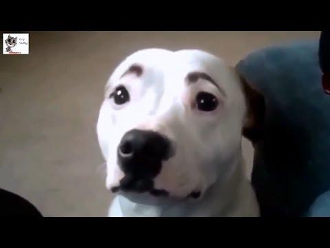 Video di cani e gatti buffissimi e giocherelloni amici mici for Cani giocherelloni