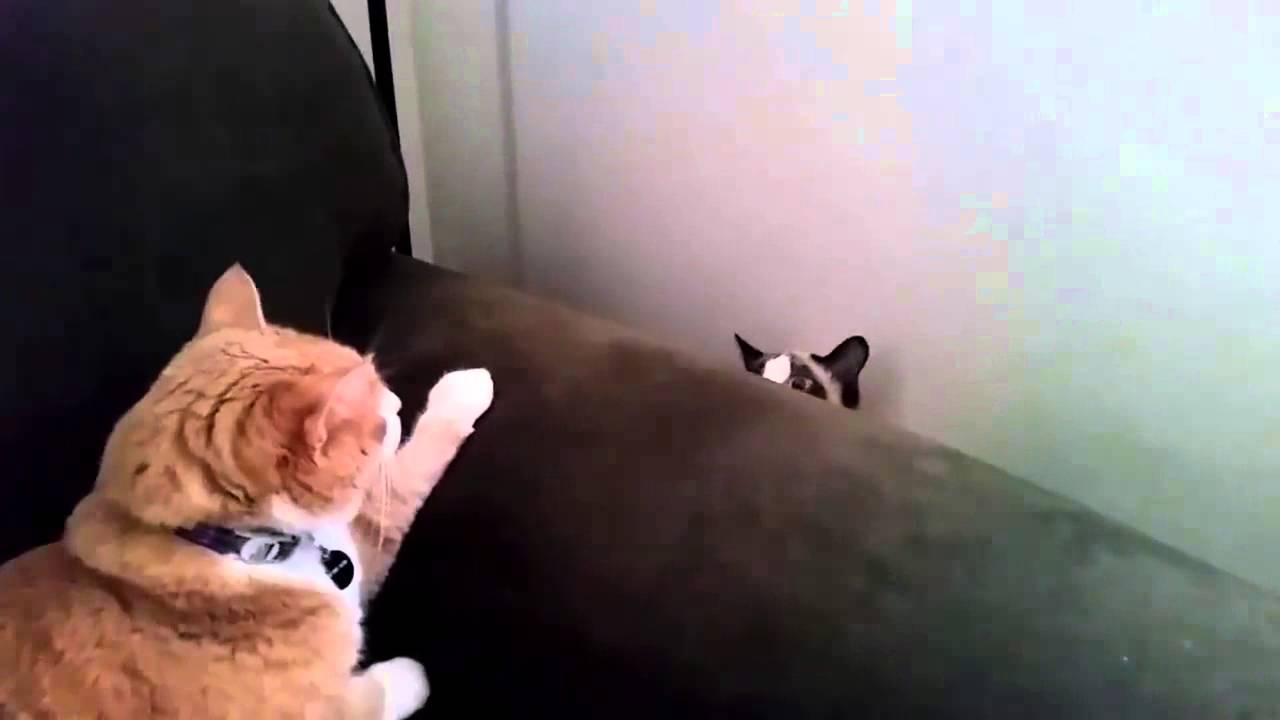Video Di Gatti Divertentissimi Amici Mici