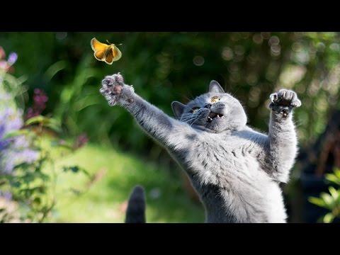 Video di gatti e cani buffi teneri e giocherelloni for Cani giocherelloni