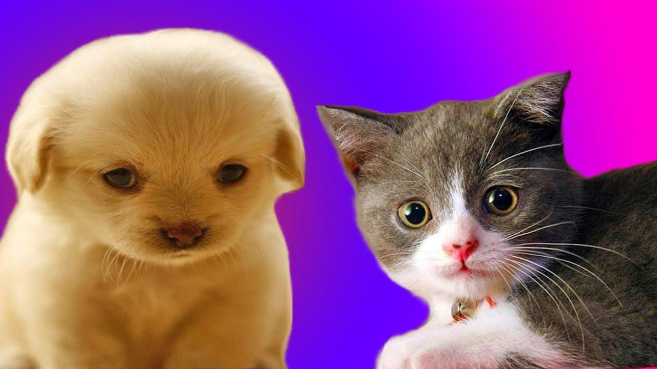 Video di gattini e cuccioli tenerissimi amici mici for Cani giocherelloni