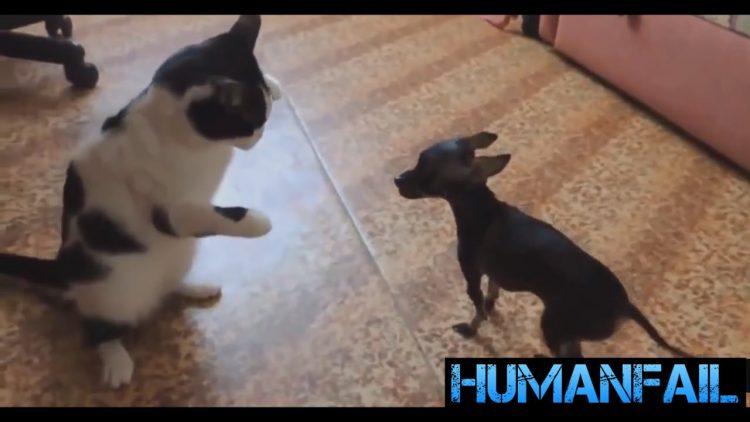 Gatti arrabbiati archivi amici mici for Cani giocherelloni