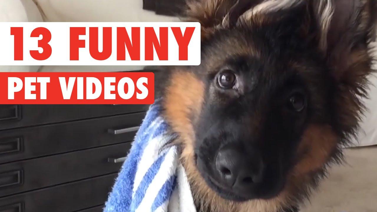 Video di animali divertentissimi e adorabili gatti cani for Cani giocherelloni