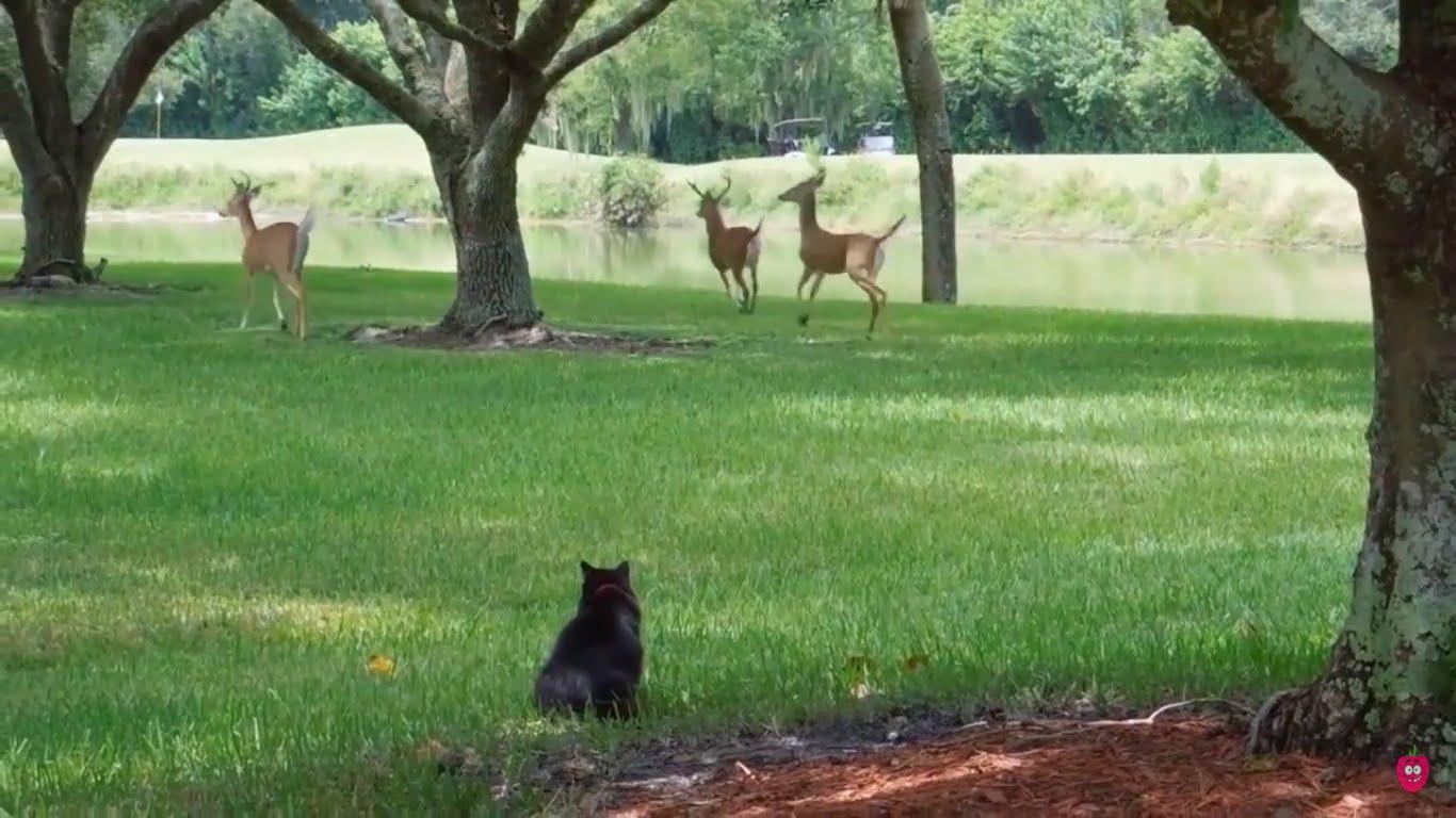 Video di animali giocherelloni e teneri cani gatti e for Cani giocherelloni