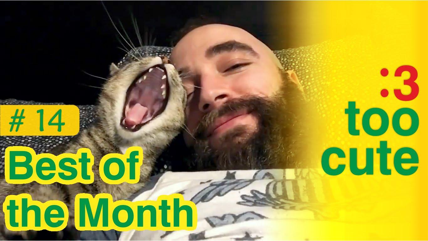 Video di gatti e cani buffi e giocherelloni risate for Cani giocherelloni