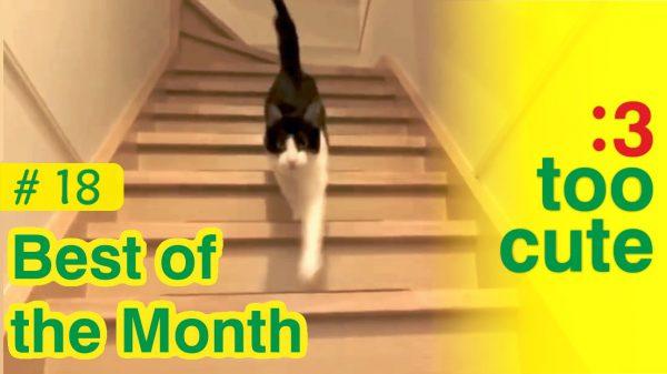Video di gatti e cani giocherelloni buffi e spaventati for Cani giocherelloni