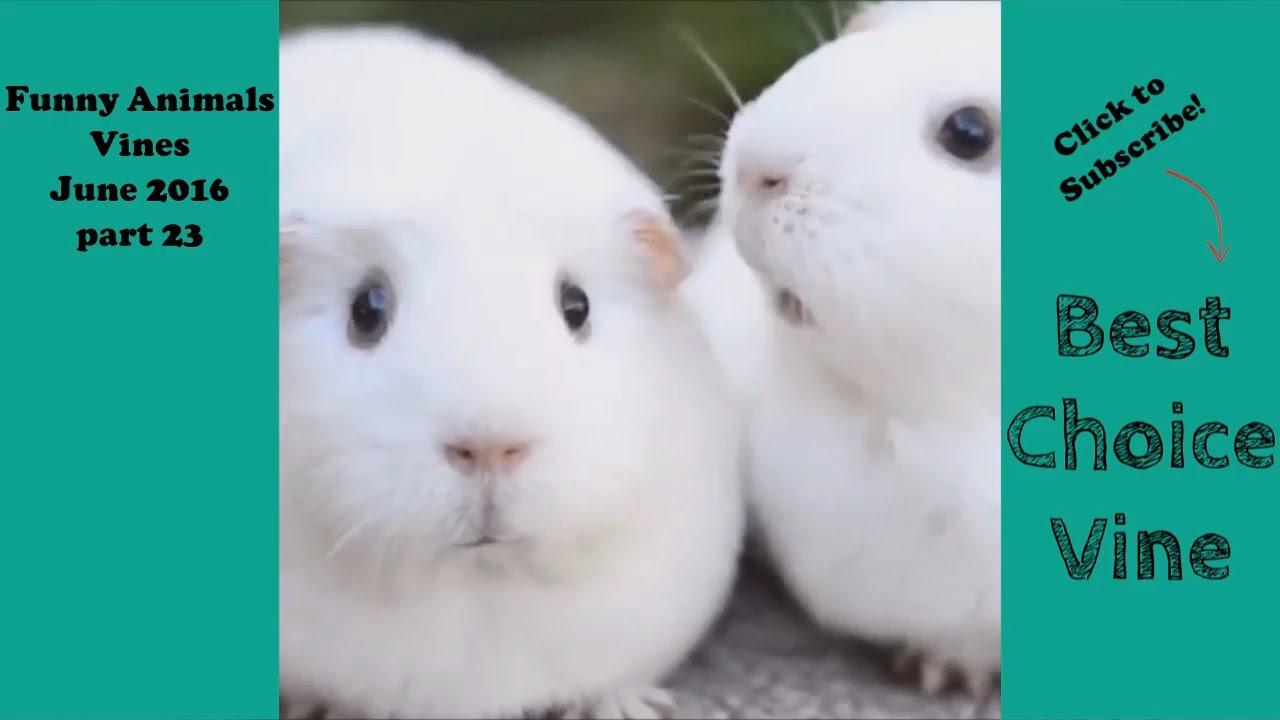 Eccezionale Video Divertente Di Animali Adorabili, Teneri E Buffissimi. Cani  CJ75