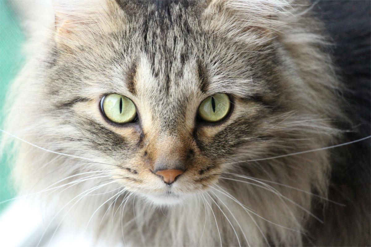Quanto Vivono I Gatti Indicazioni Strategie Consigli Sull